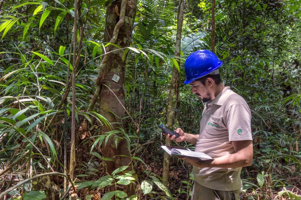 Imaflora é primeira organização da América Latina habilitada a treinar auditores FSC®
