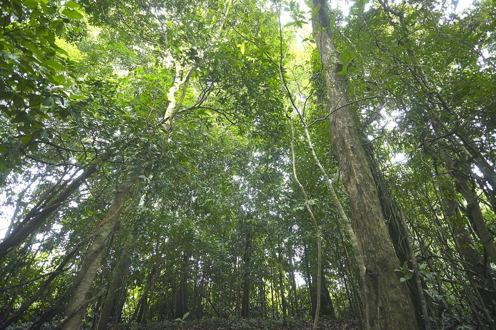 Imaflora apresenta pesquisa inédita sobre uso de dados abertos na prevenção, monitoramento e controle do desmatamento