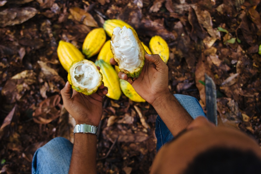 IMAFLORA releases study that reveals potential emission reduction in family agribusiness properties in the Amazon