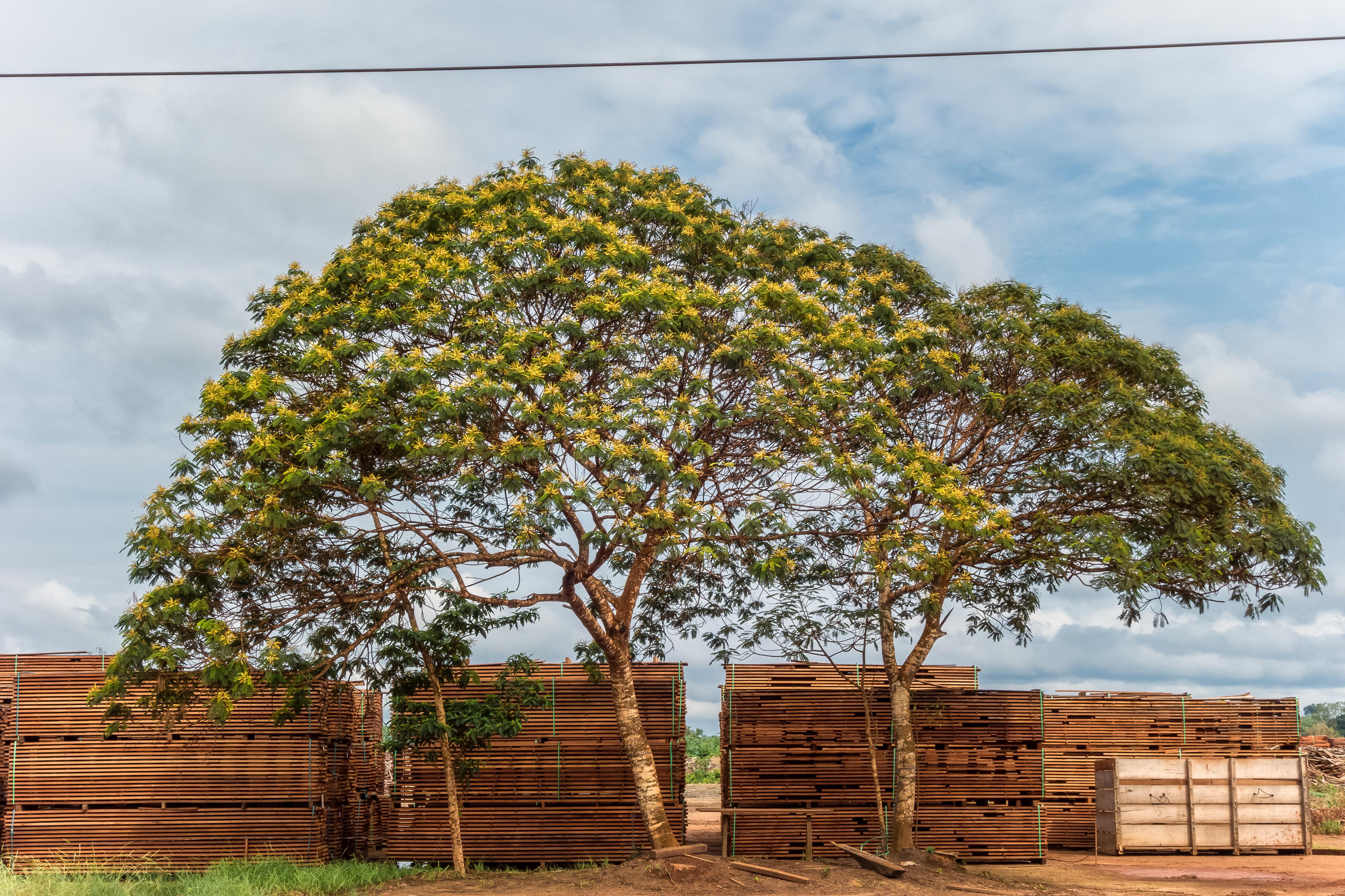 Fórum discute soluções para aumentar legalidade e sustentabilidade da produção de madeira na Amazônia