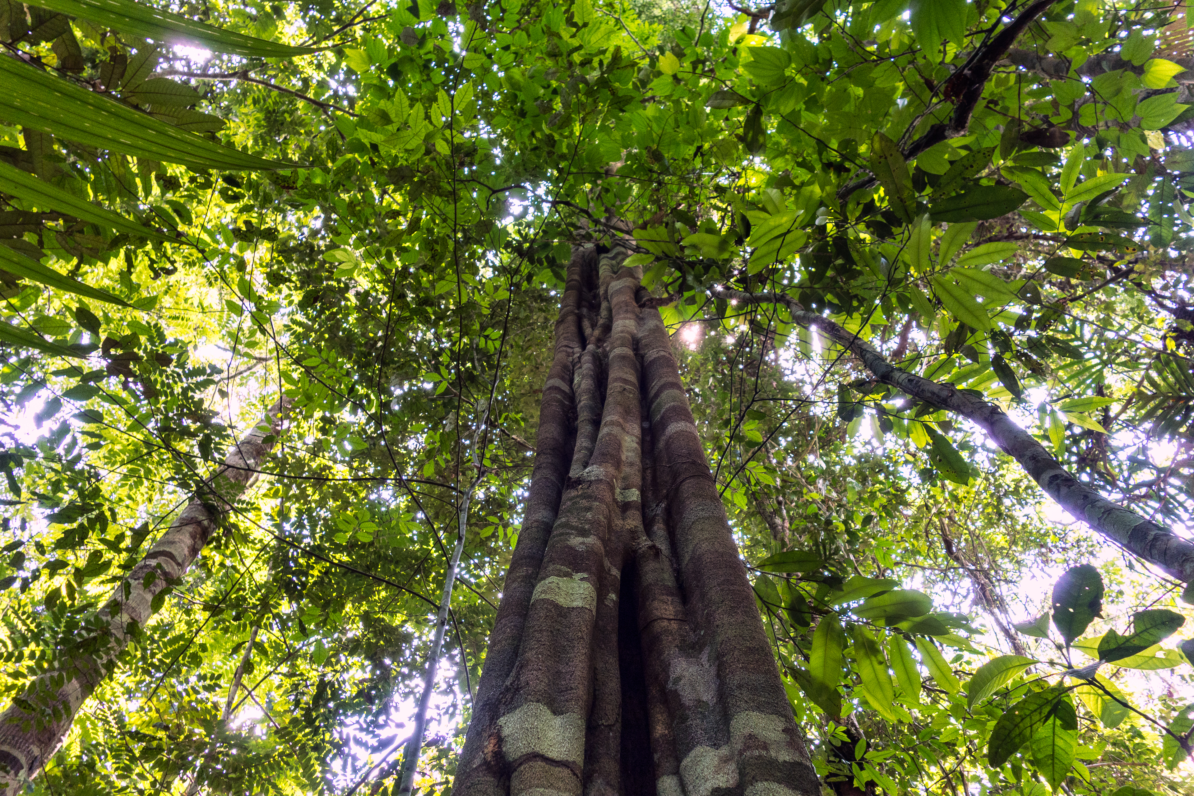 Imaflora certifica mais uma empresa madeireira detentora de Concessão Florestal Federal