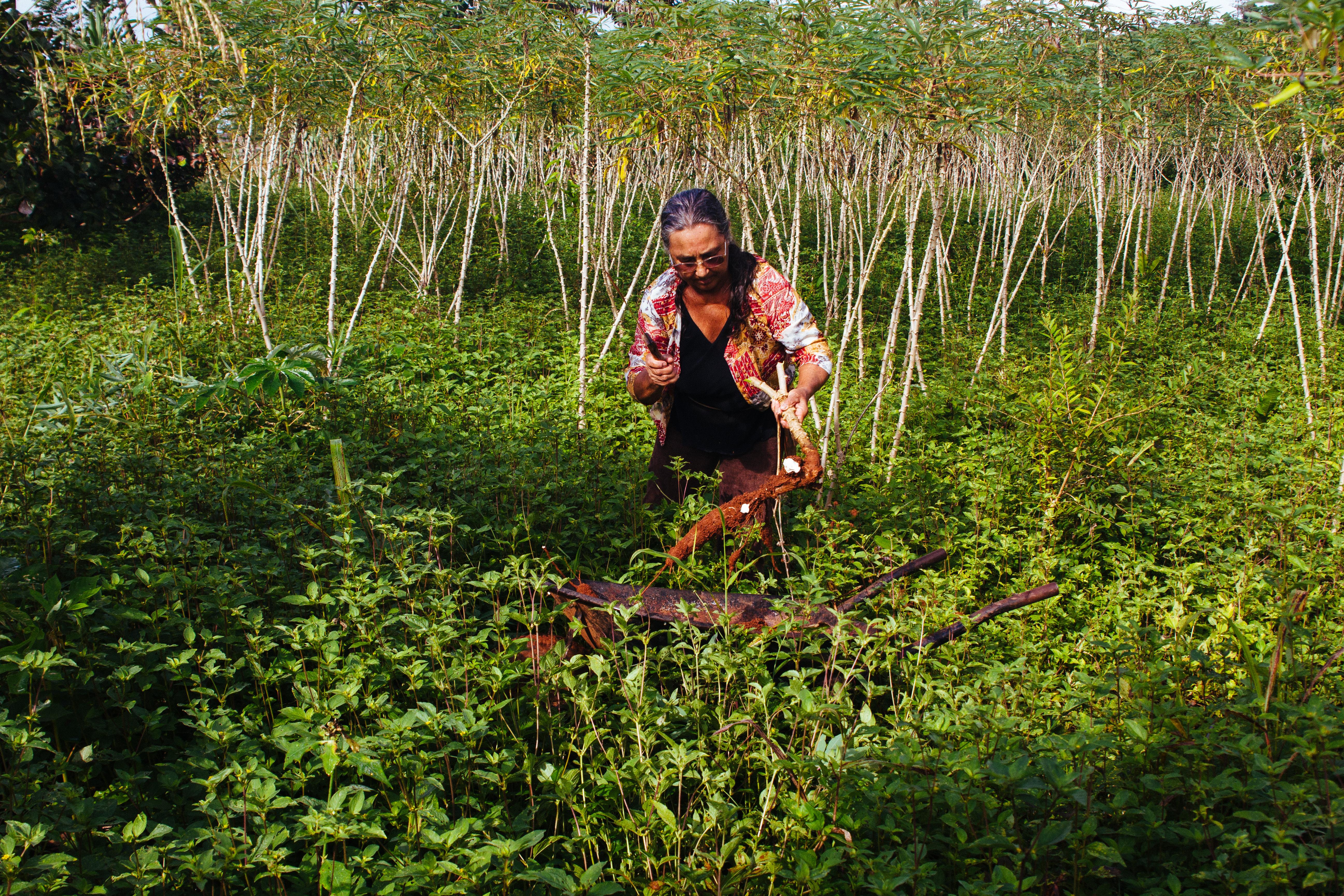 Imaflora inicia novos projetos de fortalecimento da agricultura familiar em São Félix do Xingu, no Pará