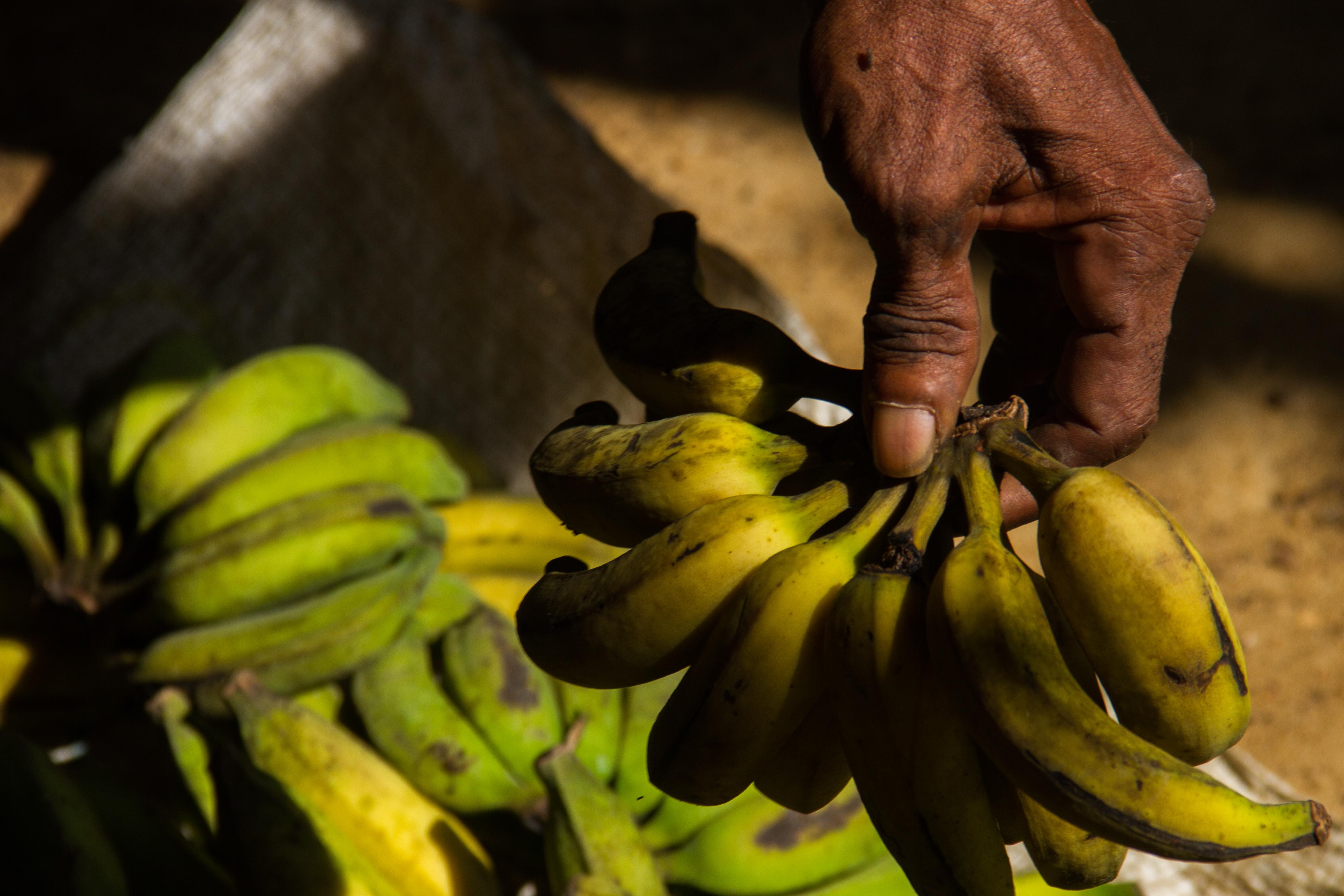 Comunidades tradicionais no Pará mantêm renda durante pandemia com venda de produtos da agricultura familiar