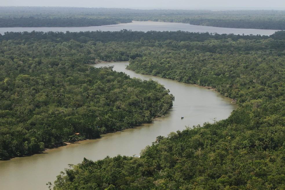 Estudo inédito mostra que manejo florestal sustentável pode suprir demanda atual de madeira em tora no Pará