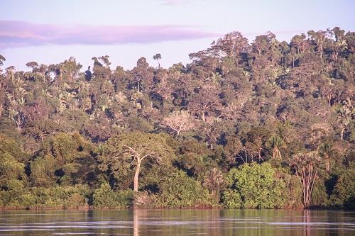 Força Tarefa Concessões Florestais