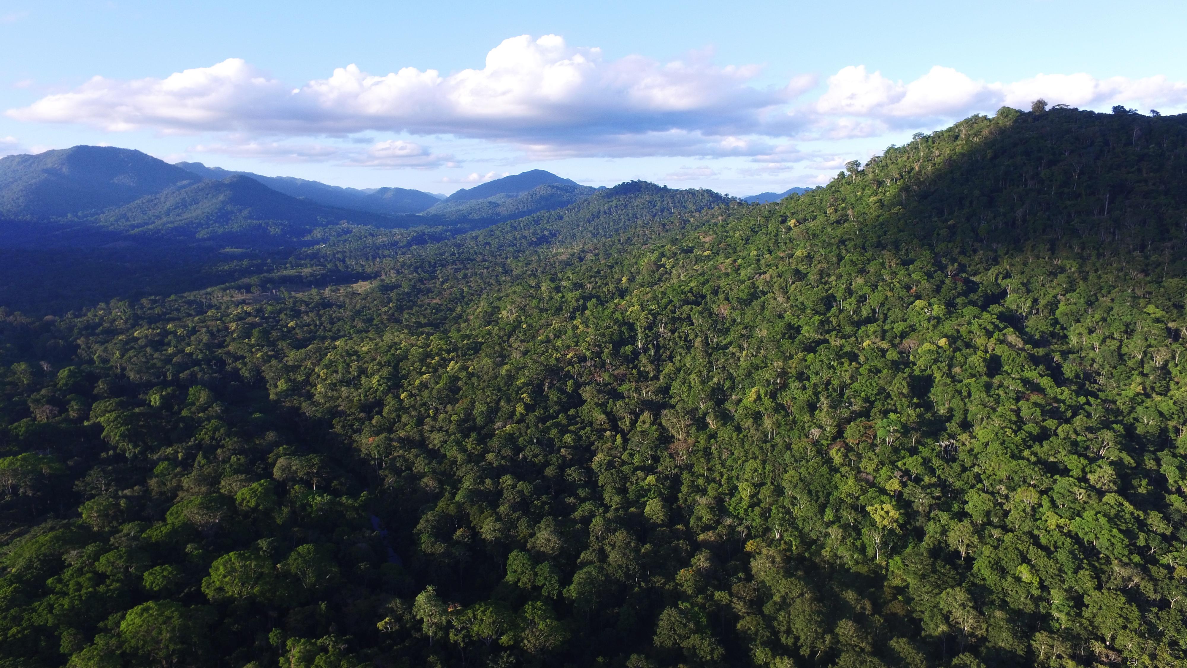 Novo Código Florestal não avançou na Mata Atlântica desde aprovação em 2012, mostra estudo