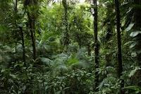 Estudo mostra que a extinção de grandes animais tem impacto negativo sobre as mudanças climáticas