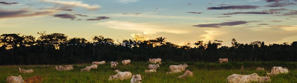 Imaflora mapeia práticas agropecuárias de baixas emissões de carbono em 21 países
