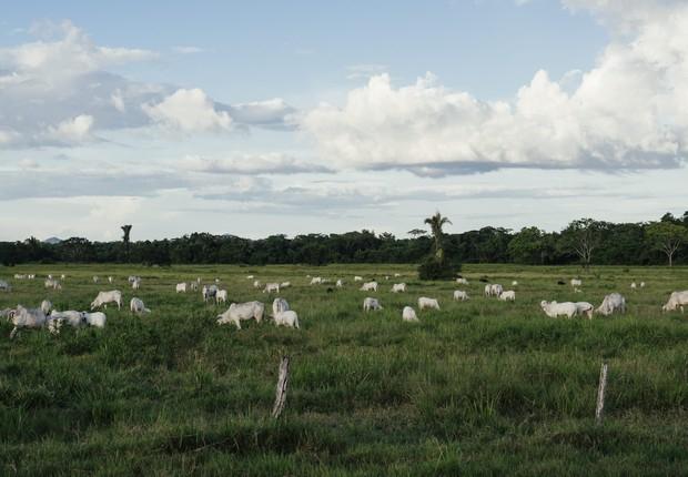 Brasil precisa modernizar a pecuária para reduzir as emissões do clima