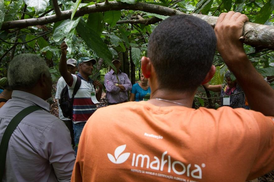 São Félix do Xingu: agricultores lideram troca de experiências em oficinas de manejo de cacau