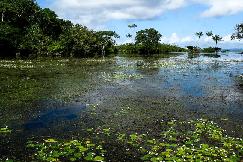 IMAFLORA 20 anos: Como tudo começou na Floresta Nacional do Tapajós
