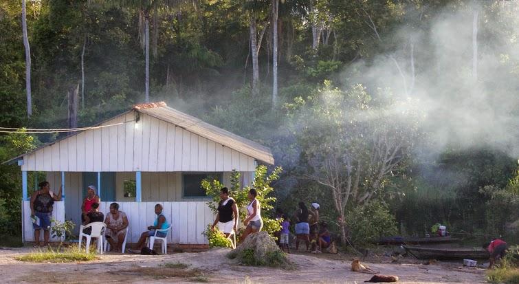 'Floresta em pé' vira negócio para quilombolas