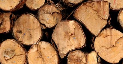 SP constrói bairro com madeira certificada