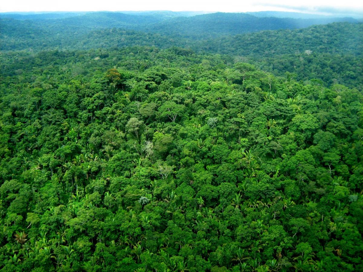 Uso múltiplo das florestas - Uma questão de bom senso