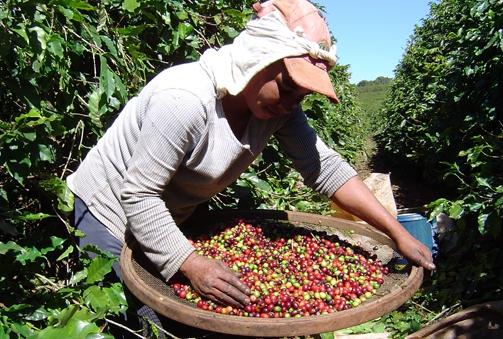 As mulheres na agricultura e a certificação