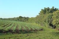 Padrão para biocombustíveis utilizado na União Européia reconhece certificação da Rede de Agricultura Sustentável