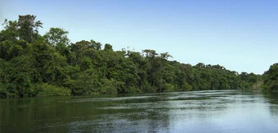 Suruí aposta em REDD como preservação da Floresta