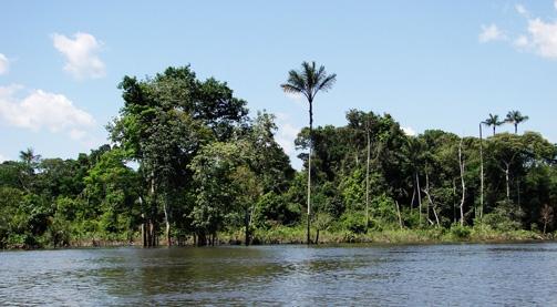 Imaflora e IFT promovem o VI Treinamento Intensivo de Avaliação em Certificação Florestal FSC e Exploração de Impacto Reduzido