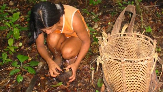 Marginalizados economicamente, extrativistas da Amazônia querem condições para manejar legalmente a floresta
