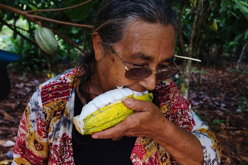 Projeto investe na agricultura familiar como alternativa ao desmatamento  em São Félix do Xingu, Pará