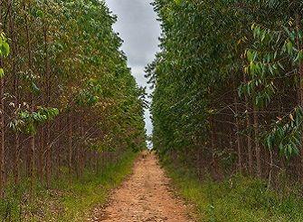 AFI – Auditoria Florestal Independente