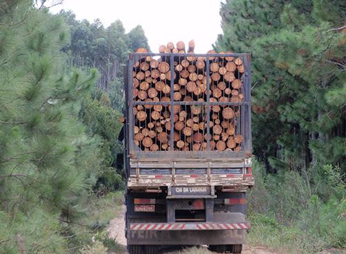 Timberflow